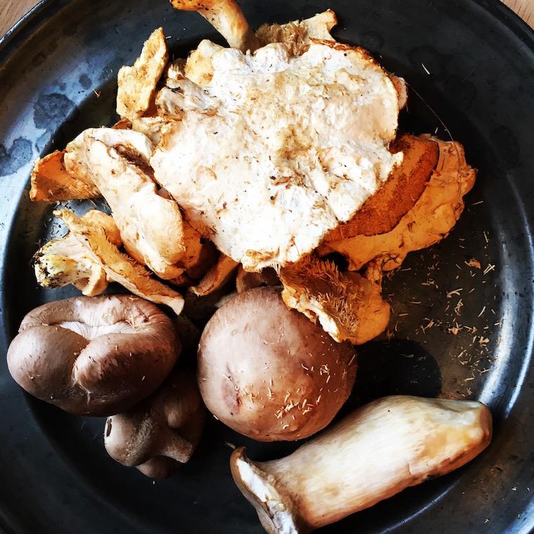 risotto-champignons-7