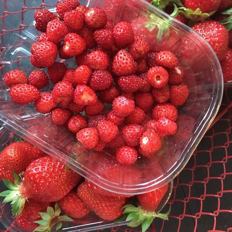 fraiseraie-15