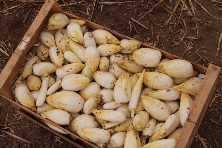 coquilles-pommeau-1